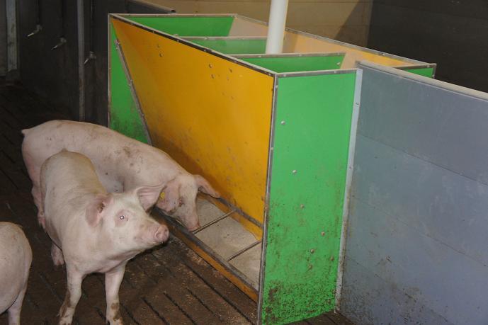 Кормовые автоматы для свиней своими руками